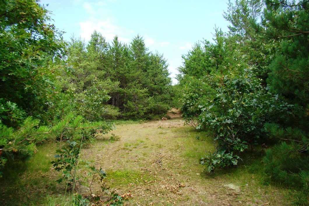 5.3 Acre Adams County Wooded Land for Sale!