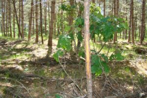 Central WI Wooded Land for Sale - 9 Acres!