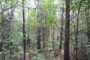 10 Acres with Huge Trees and Meadow near Webster, WI!