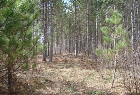Oneida County Real Estate - 8.5 Acres only $46,900!
