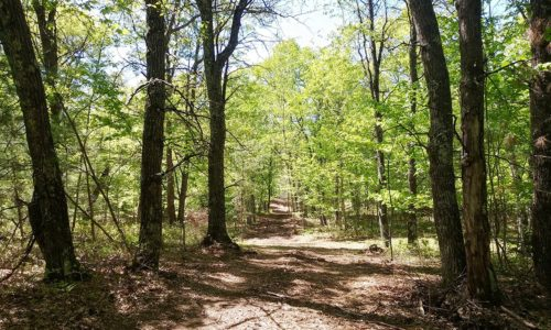 Marinette County Wooded Land for Sale Adjoins County Forest!