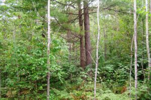 Oneida County Real Estate - 3 Acres only $19,900!