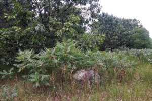 Coloma, WI land for sale