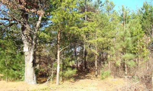 Castle Rock Land For Sale only $19,900!