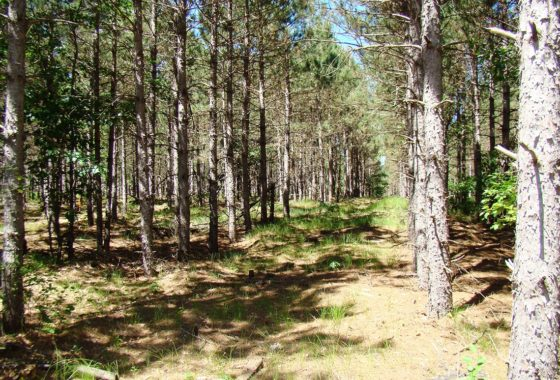 Lake Petenwell Land For Sale only $34,900!