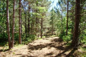 Lake Petenwell Land For Sale - 11 acres only $61,900!