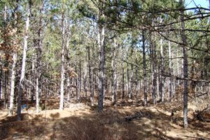 Lake Petenewell Land For Sale only $24,900!
