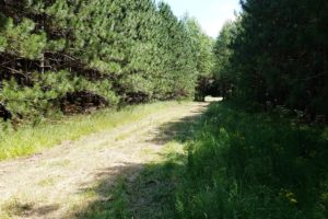 Crivitz, WI Wooded Land