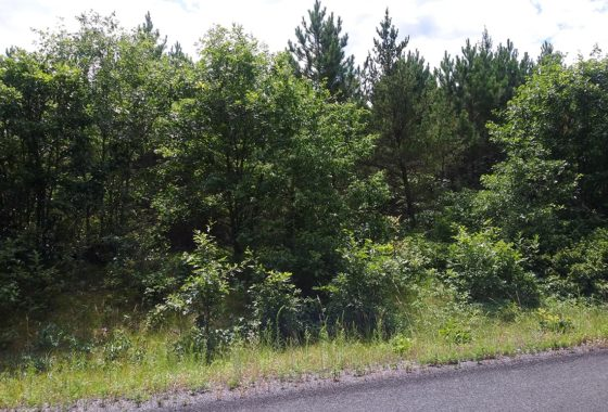 11 Wooded Acres Near the St. Croix River and Grantsburg, WI!