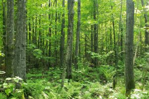 Forest County Wooded Land for Sale Near All Sports Lakes!