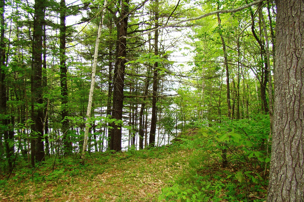 Ross Allen Lake