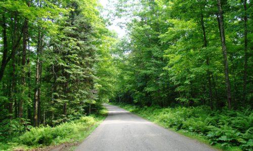 Pickerel Lake, WI Wooded Land only $27,900!