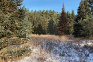 Crivitz, WI Wooded Land only $19,900!