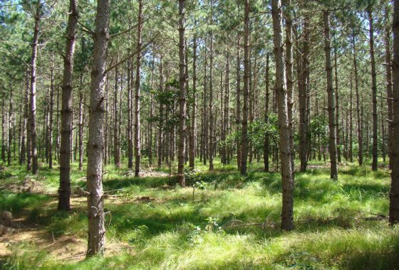 Siren, WI Land For Sale only $29,900!