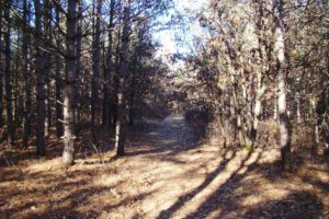 7 Acres in Central WI!