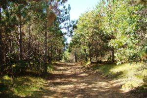 St. Croix River 4.2 Acre Retreat!