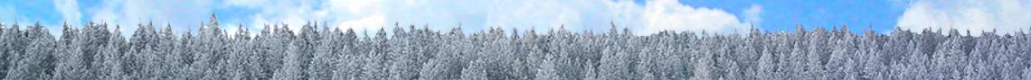 Winter Land Sale