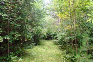 Northern Wisconsin, 5 Acres, Mature Woods, Oneida Lake!