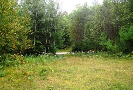 Northern Wisconsin 5 Acres of Woods in the Heart of Recreation!