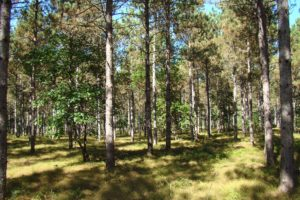 Wooded WI Camping/Building Acreage & Lake Petenwell!